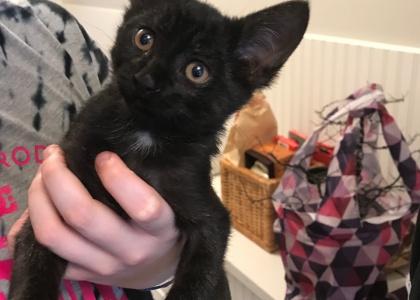 London-Kitten