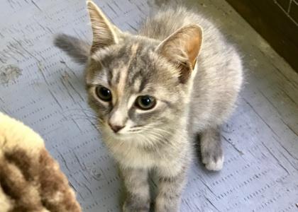 Coral-Kitten