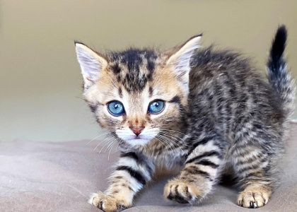 Ty-Pending Adoption
