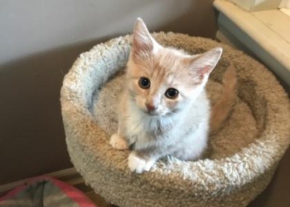 Skittles-Kitten