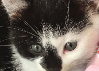 Elsa-Kitten