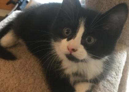 Heidi-Kitten