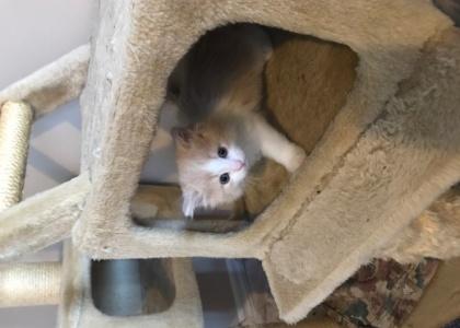 Joanie-Kitten