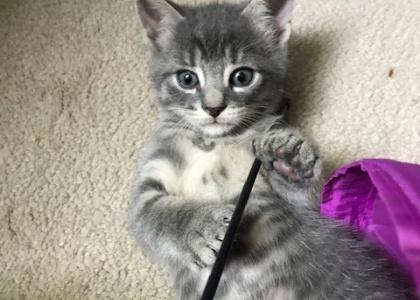 Watermelon-Kitten