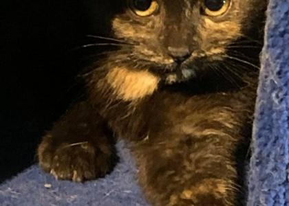 Tortellini-Kitten