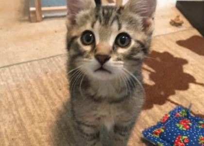 Beamer-Kitten