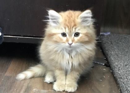 Fernando-Kitten