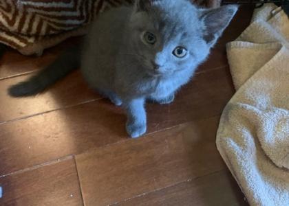 Rocky- Kitten