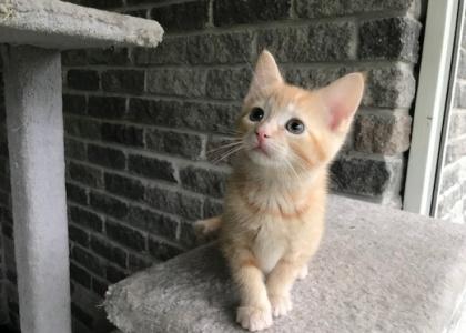 Rey-Kitten