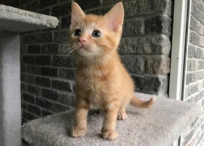 Luke-Kitten